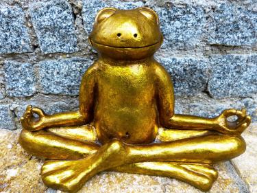 Yoga & Meditatie op de Maaspoort